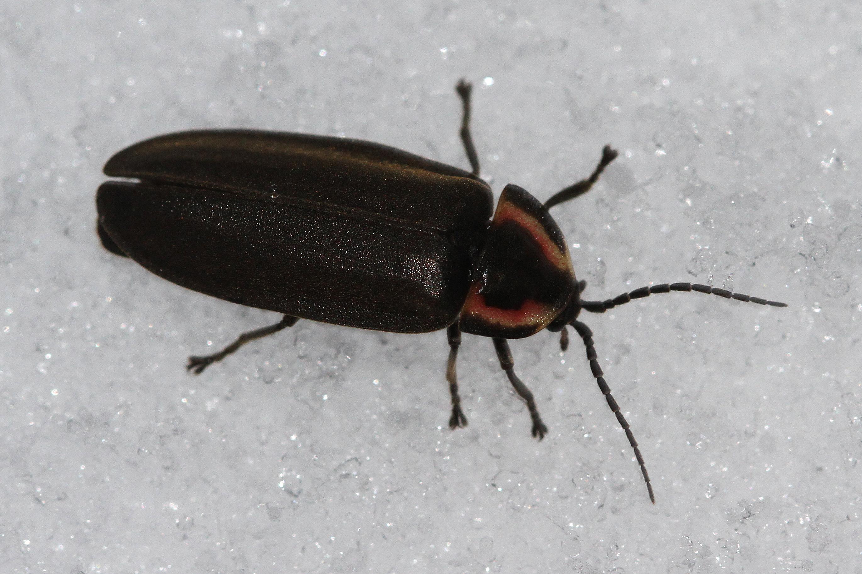 45ab9e601d Winter Fireflies