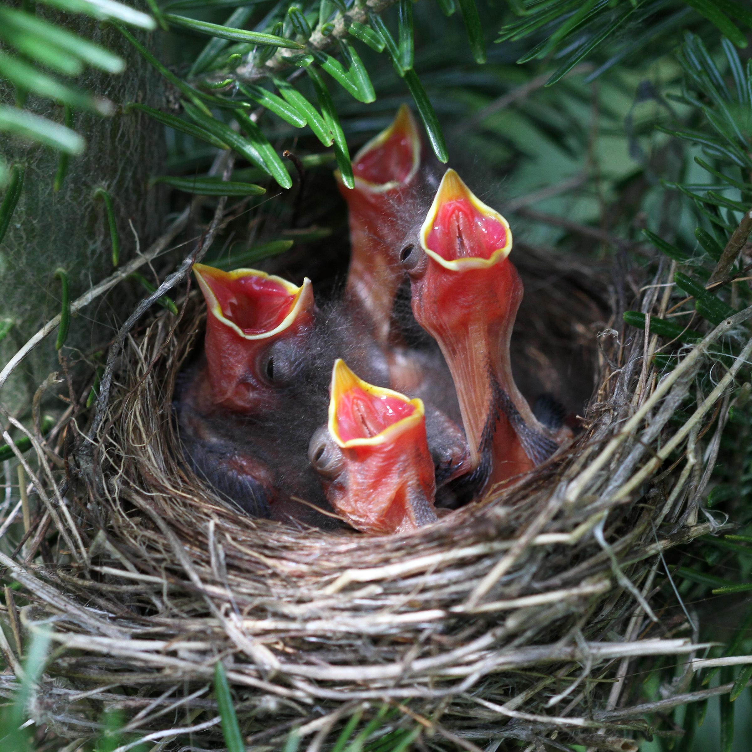 Image Gallery Sparrow Eggs