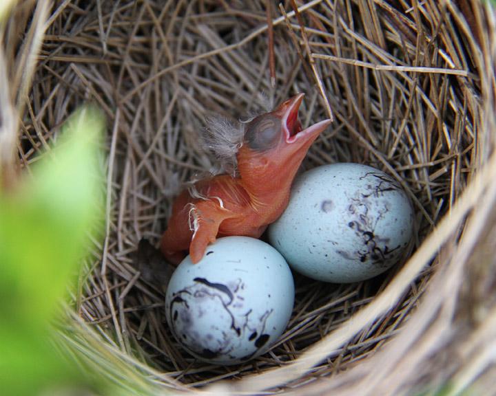 A bird hatching nature at its best 4
