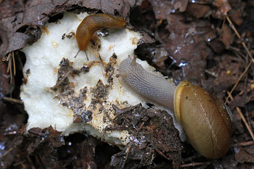 18-11 gastropods IMG_9121