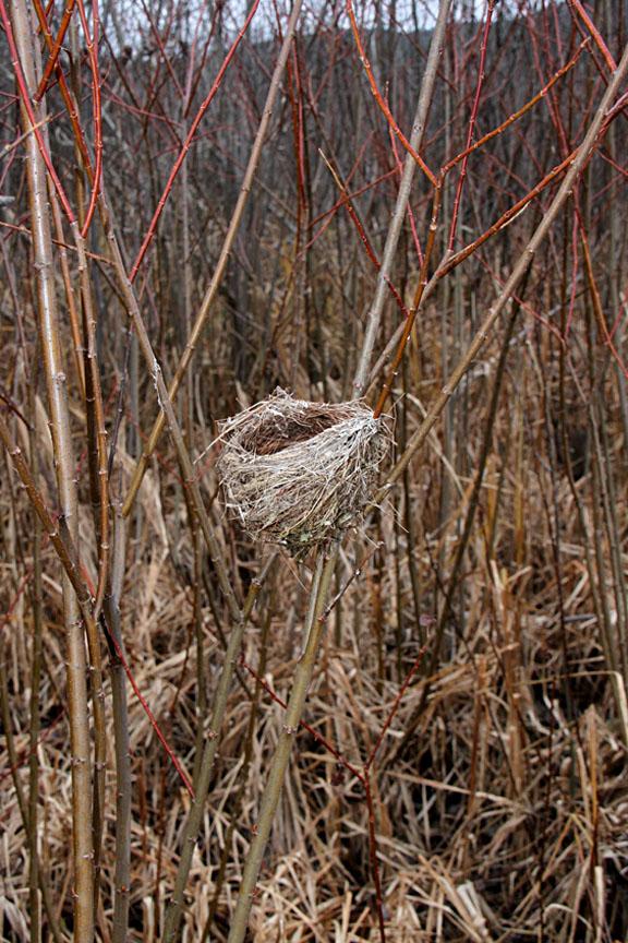 american goldfinch nest - photo #14