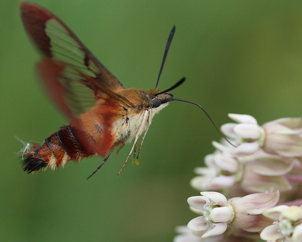 PerkyPet Hummingbird Glass 8 Bottle Nectar Feeder 4
