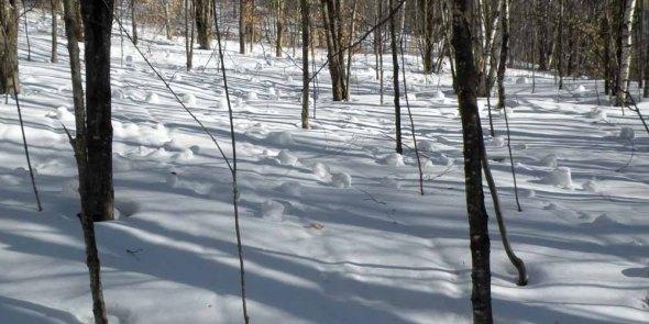 1-31-13 woodland snowdonuts by Ginny 1 27 (5) (2)
