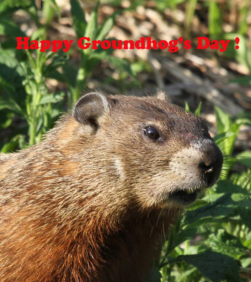 2-2-13 Happy Groundhog's Day IMG_2377