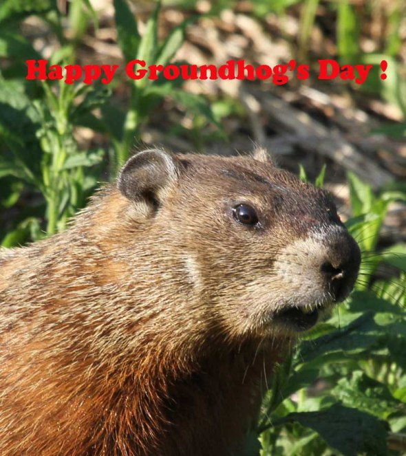 2-2-13 Happy Groundhog's Day IMG_2377