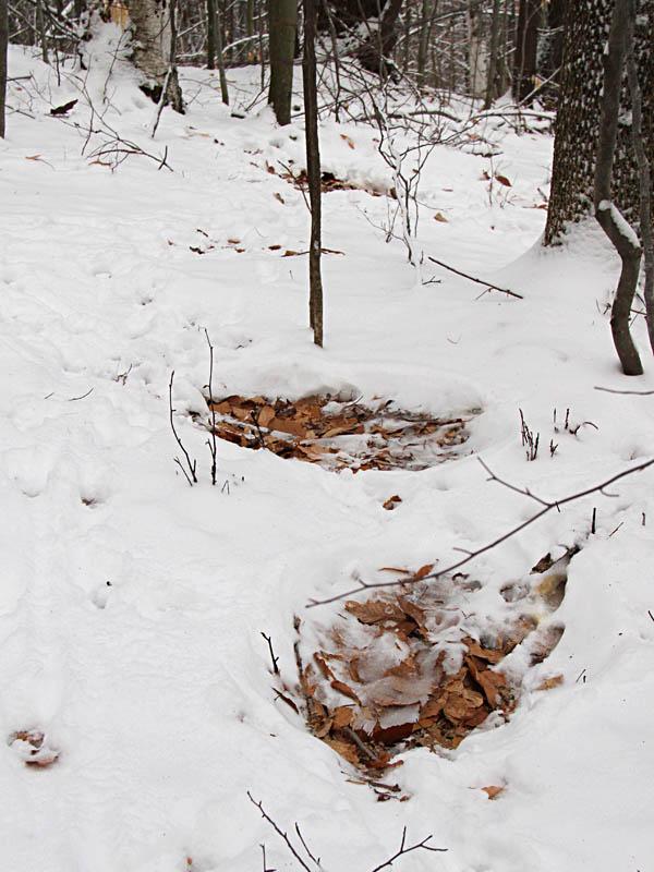 2-26-13 deer bedsIMG_5183