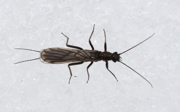 3-4-13 stonefly IMG_5015