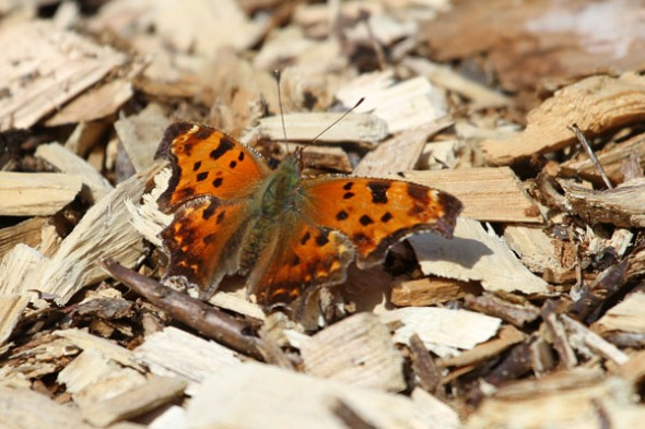 4-23-13 green comma IMG_9353