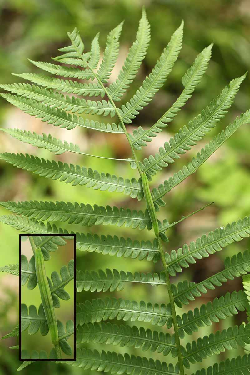 6-14-13 camouflaged catterpillar 049