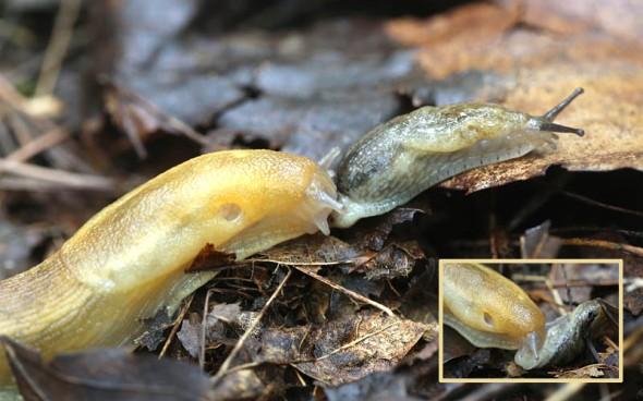 9-2-13 slugs 035