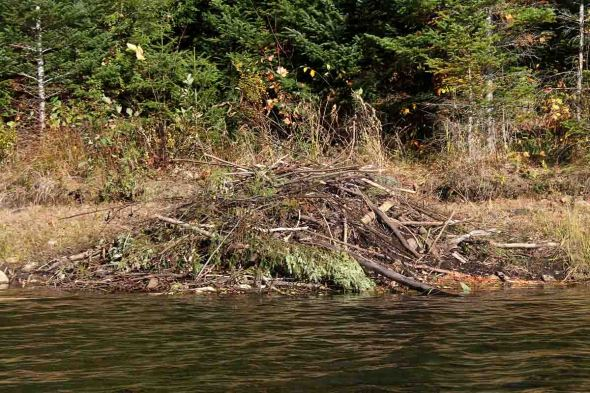 10-14-13 refurbished beaver lodge 248