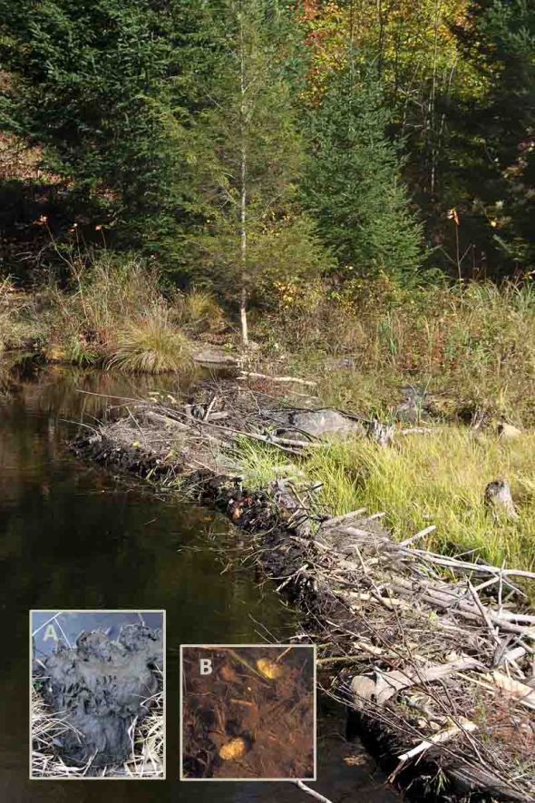 10-15-13 beaver dam 208