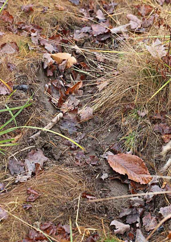 11-1-13  moose wallow 010