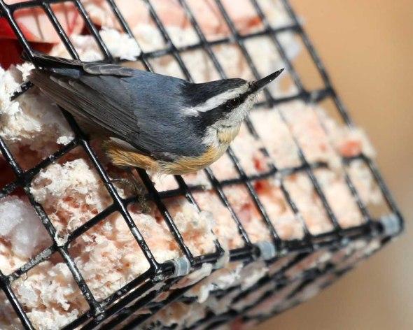 1-15-14 bird feeders 139