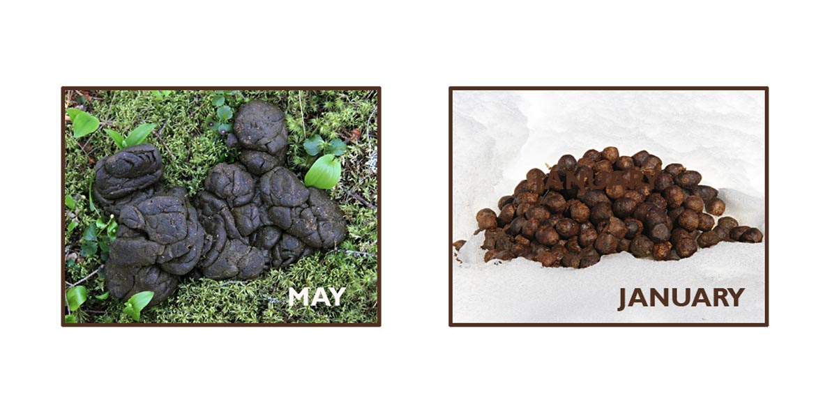 Complete Animal Scat Guide The North Woods Field Guides