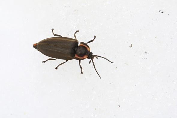 2-24-14  winter firefly 316
