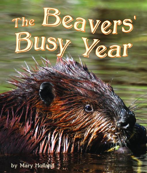 COVER-BeaversBusy