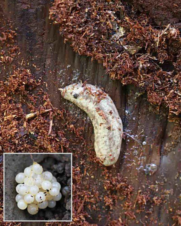 4-1-14  slug under bark 223