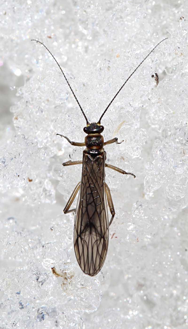 4-2-14 stonefly 123