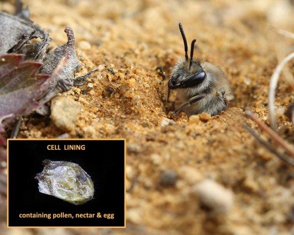 5-12-14  cellophane bee  205