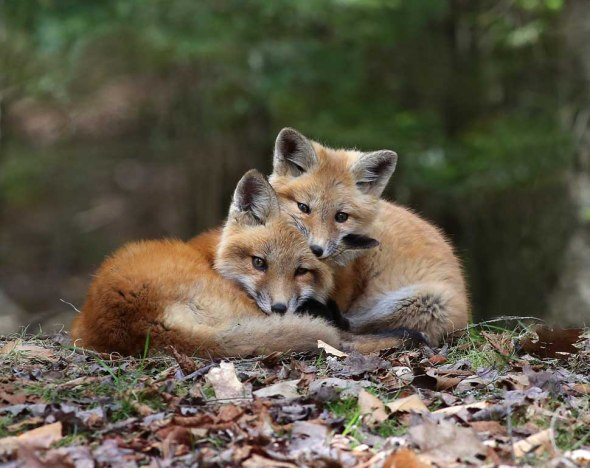 fox kits-donation photo 084