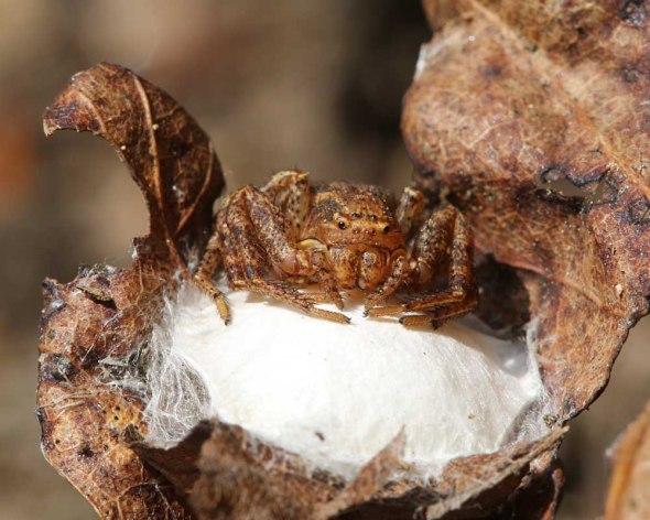6-5-14 jumping spider2  077