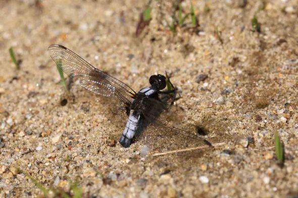 7-23-14  dragonfly mystery photo 020