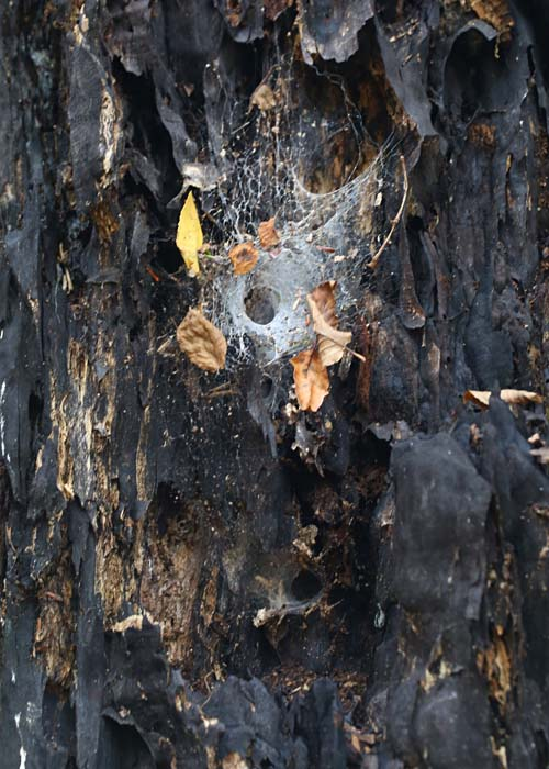 10-16-14 funnel weaver web 045
