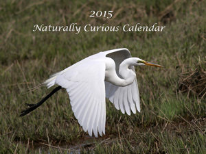 2015 Calendars :  $30 (includes shipping) To order, email me at mholland@vermontel.net.