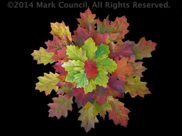Mark Council's leaves