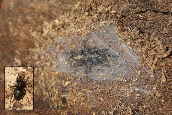 11-24-14  spider 050