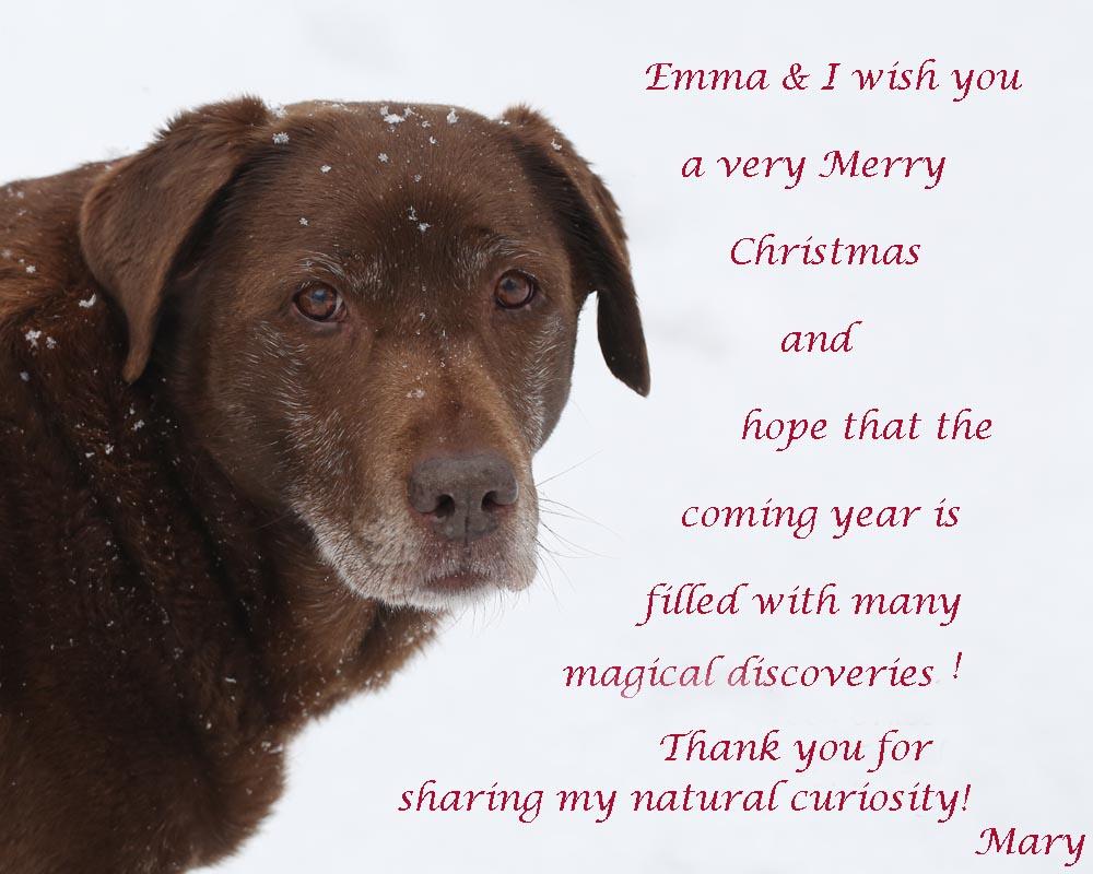 12-25-14  Emma -Christmas greeting 049A7736
