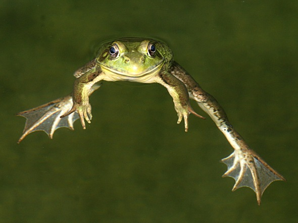 1-9-15  green frog IMG_0181
