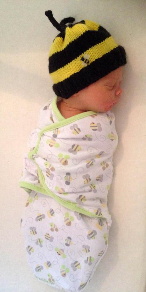 baby bee brown IMG_4365