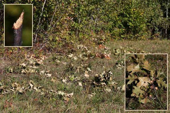 10-1-15 mystery photo 078