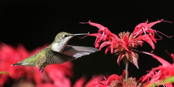 9-7 female hummer IMG_1097