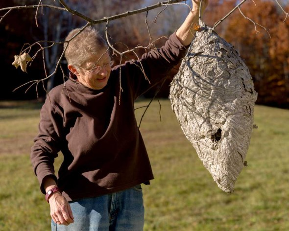 Mary Holland holding very large wasp nest, which was built above her house