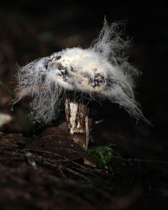 12-16-15 mycelium IMG_1568