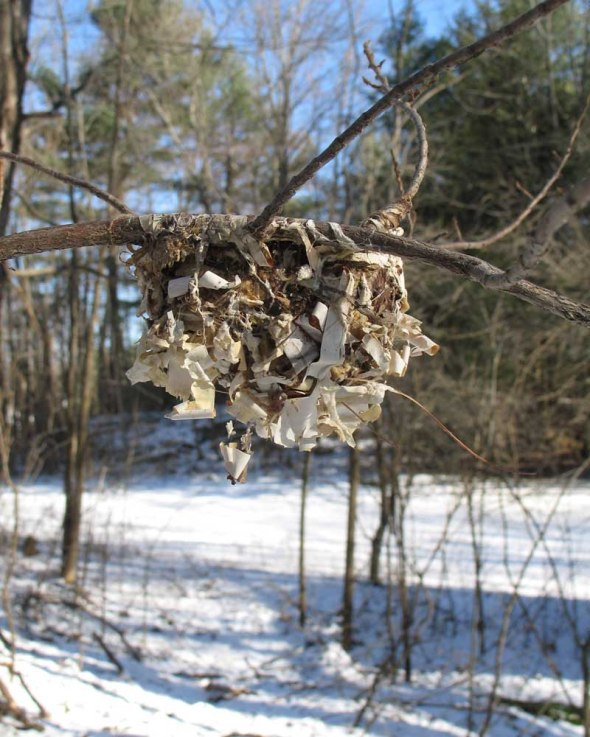1-28-16 red-eyed vireo nest IMG_6315