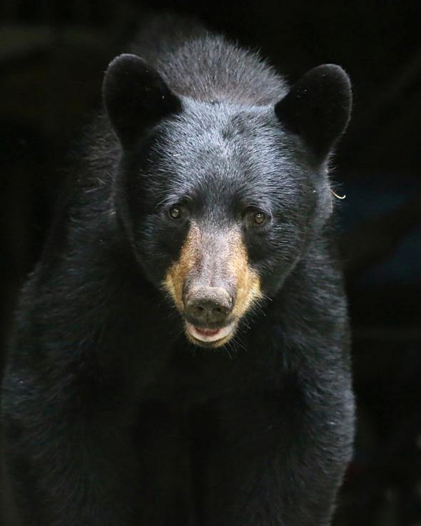 3-4-16 black bear 353