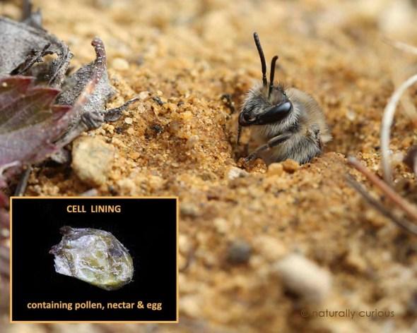 4-20-16  cellophane bee  205