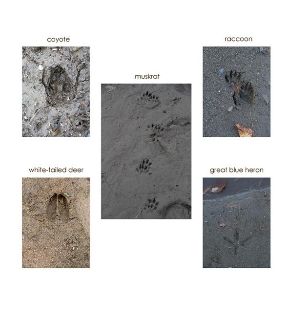 10-27-16-tracks2-1