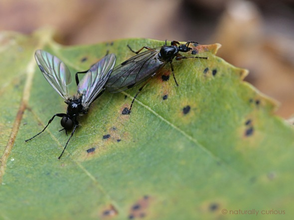 11-18-16-lovebugs-mh_20091020_004606_2