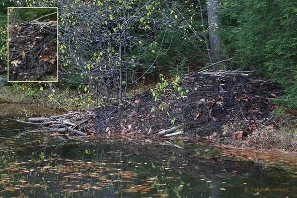 11-24-16-beaver-lodge-049a1681