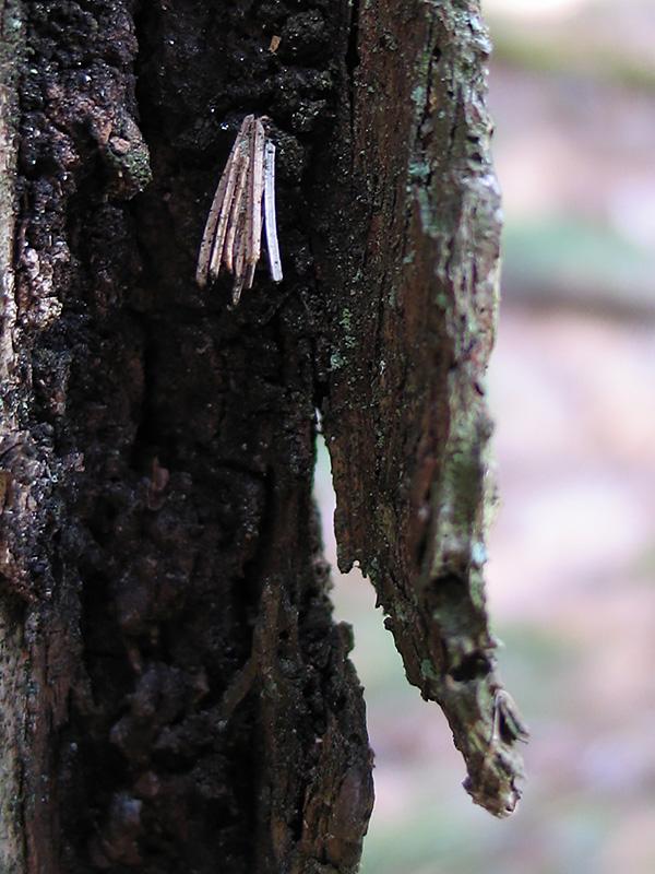 12-22-16-bagworm-img_4272