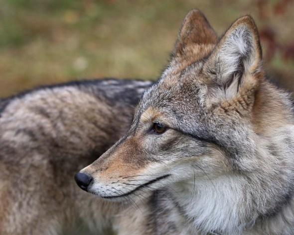 email-coyote-153