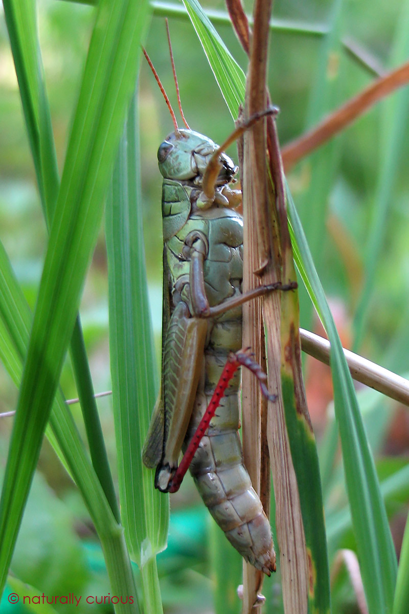 Where Do Grasshoppers Go in the Winter? | Reference.com