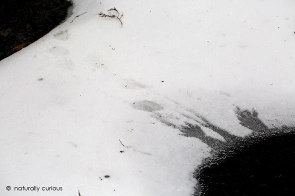 mystery-photo-049a2992