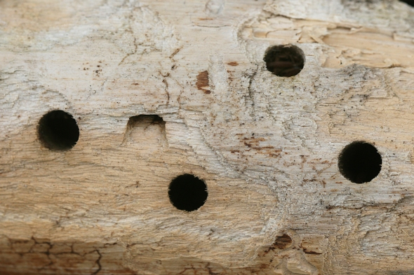 email-carpenter bee holes IMG_1408