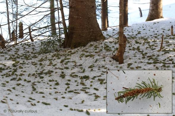 4-11-17 squirrel nip twig2 019